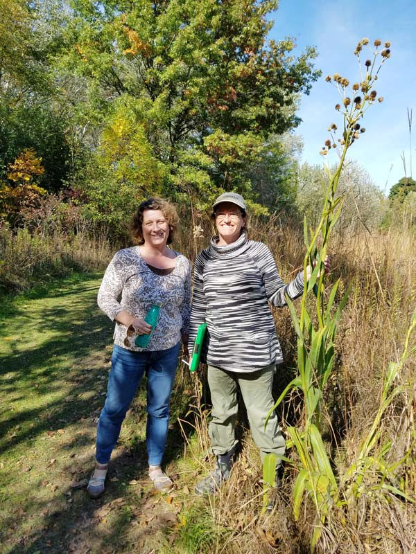 """Getting our backyard prairie certified with Mary Fortmann of Conserve Lake County (on the right). Shown here is a """"very happy"""" Rattlesnake Master plant!"""